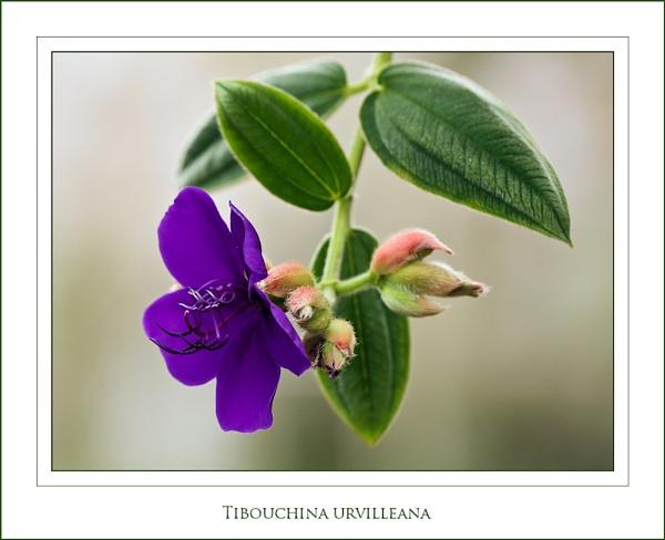 ~ Princess Flower ~ by KKmoments