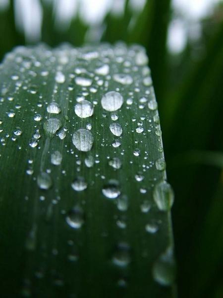 raindrops by clara_bow