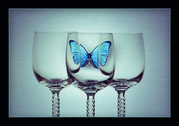 Butterfly by olesyak