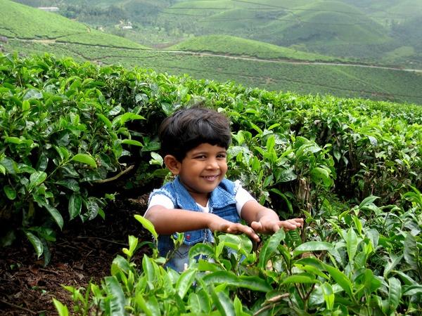 Tea Fresh by Nabs