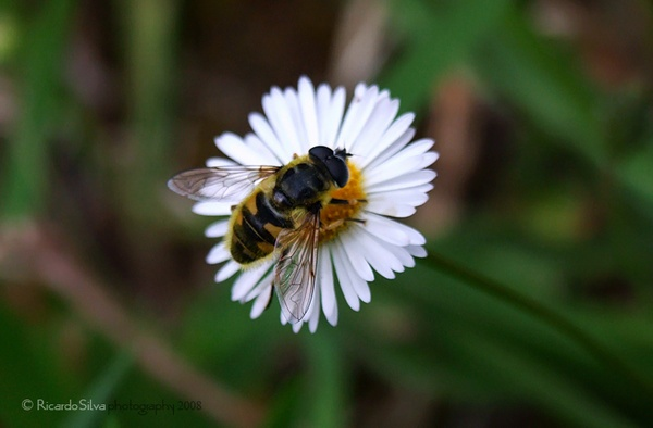 Bee by FrozenGRUDGE