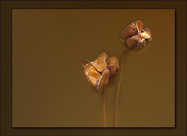 Seedheads by Angi_Wallace