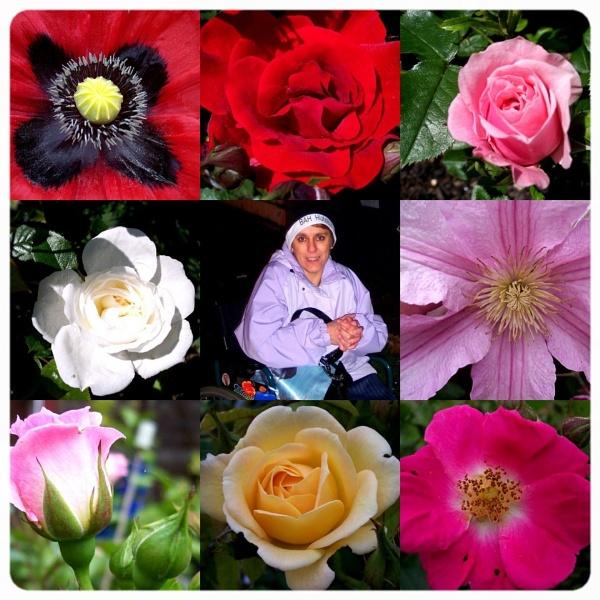 My Flowers !!! by graceland
