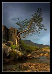 Glencoe Tree !!!