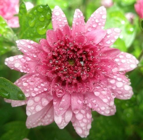 Flower a little wet
