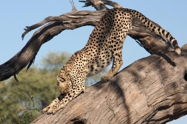 Morning Stretch by P_Higham