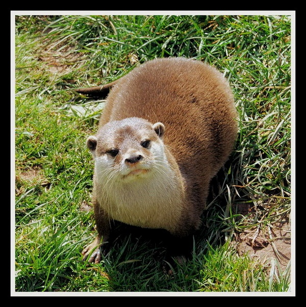 Otter by Bluetooth