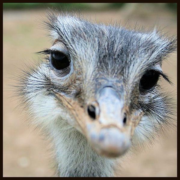 Emu by Bluetooth