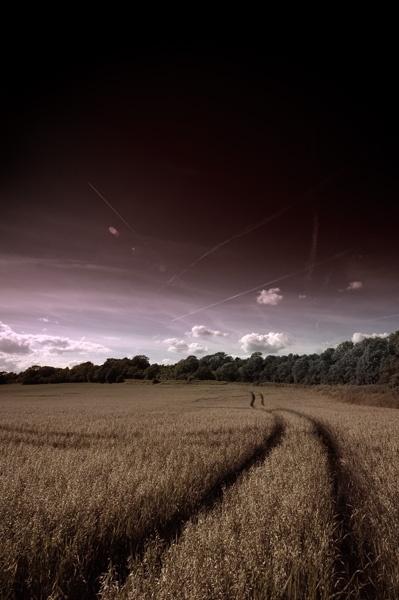 Elstead Road by maxmaxmax