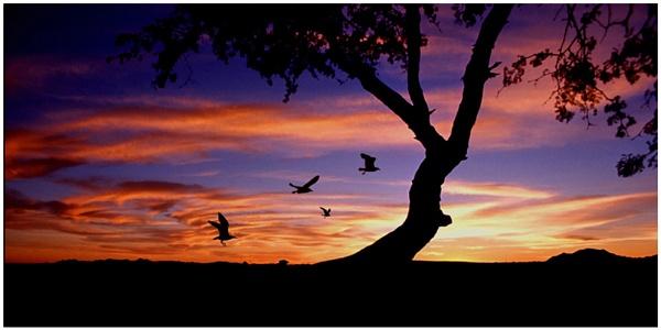 the Birds by WimdeVos