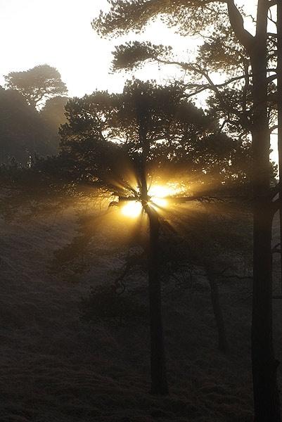 Sun Burst Tree by DaveH64