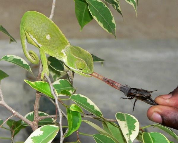 I love crickets by KangaGal