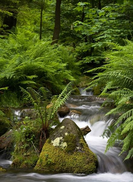 Lakeland stream by Steve Cribbin