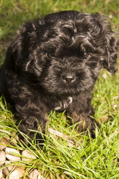 Puppy by wheeldon