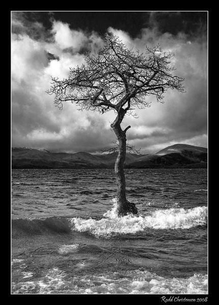 That Tree... by RoddBC