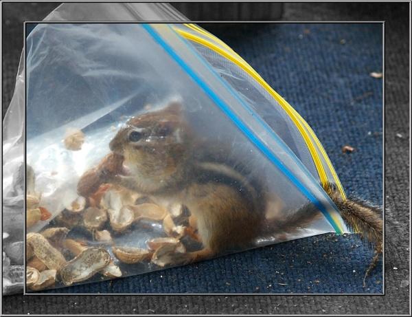 Munks Nuts by Mrtaz30