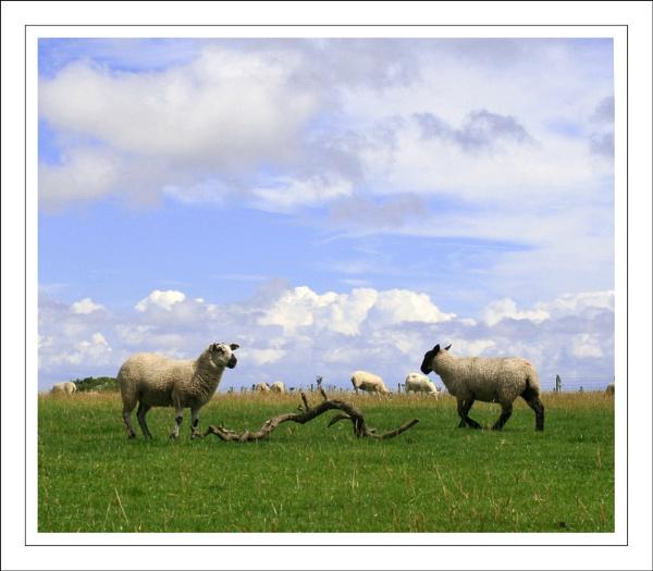 Surreal Sheep by GrahamBaines