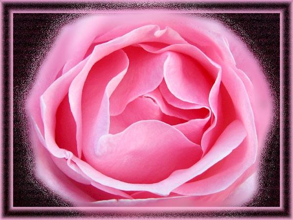 Rose 2 by digiray63