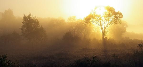 Golden Mist by DaveH64