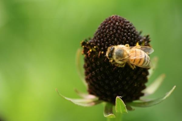 Busy little bee by vickik