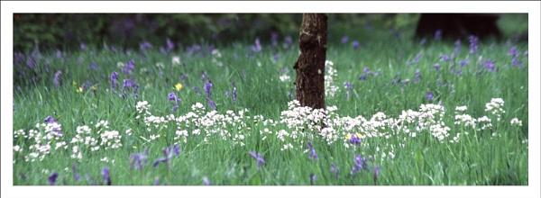 Springtime. by rontear