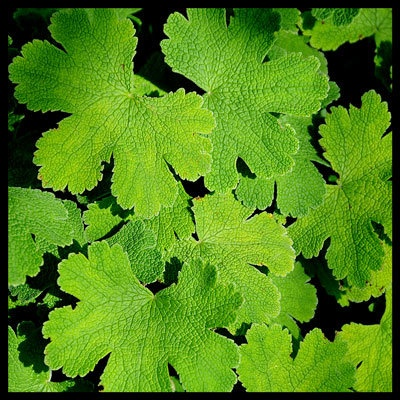 Leaf Textures by kevster