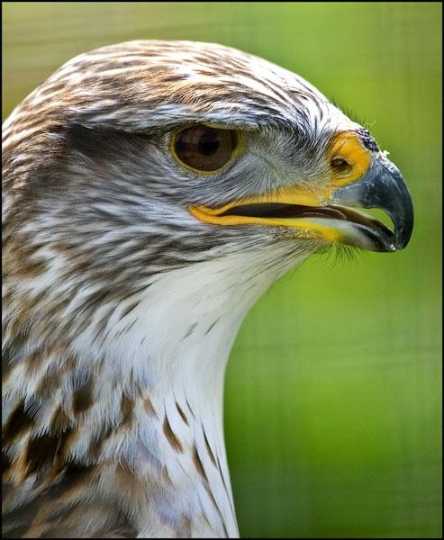 Falcon by brand