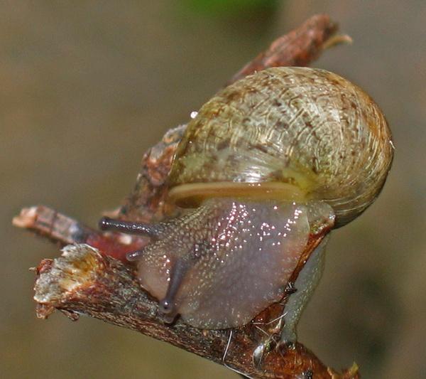 Snail by telfordtrio