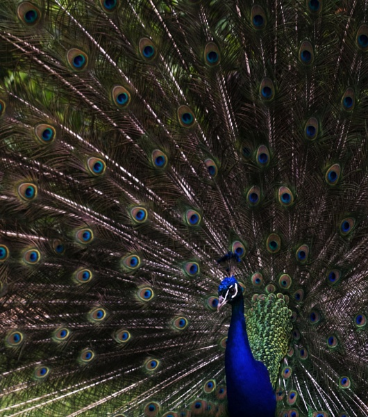 Shake Your Tail Feathers! by PaulaLey