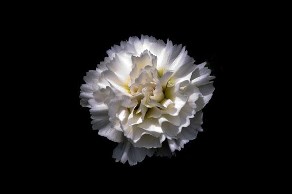 Ice White by richard00