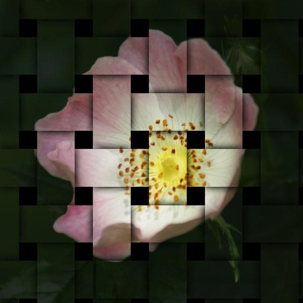 Interwoven Flower by CTee