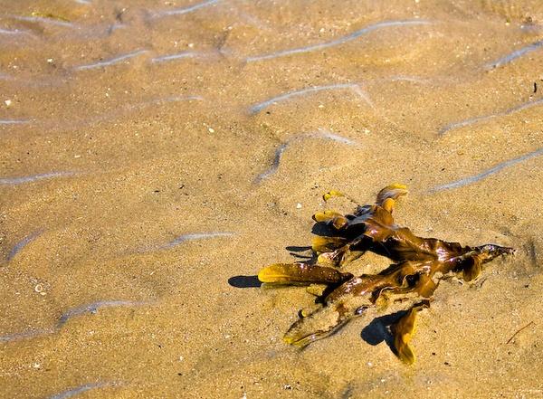 Seaweed by marc484ie