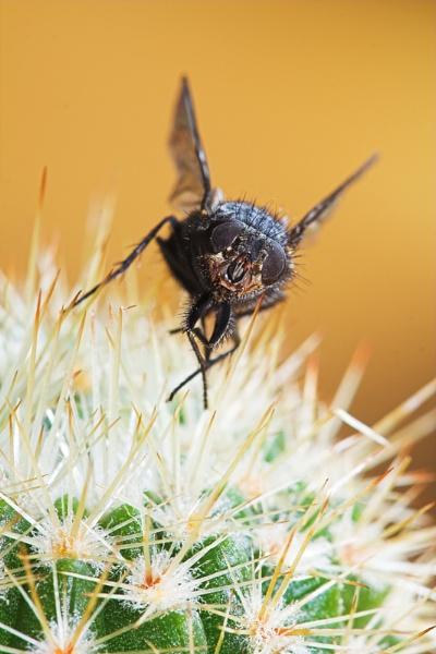 cactfly by ZakBlack