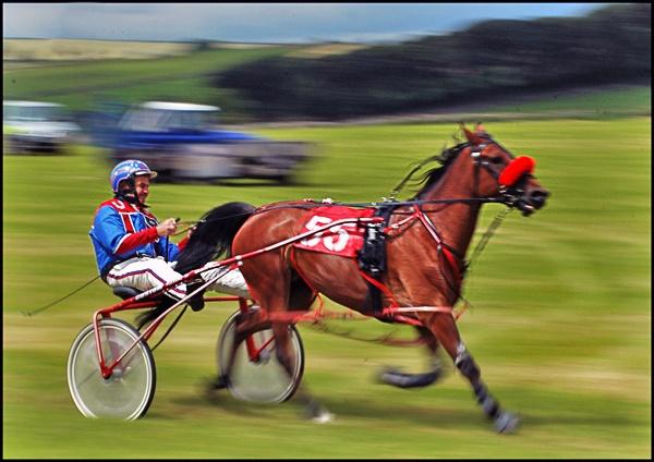 Harness race by BERTRAM