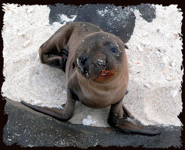 Sea-lion pup by KangaGal
