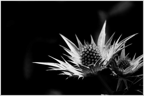 Spiky Too by vickik