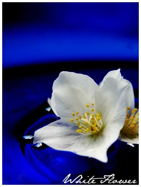 White Flower by BrokenAir