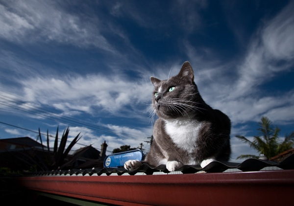 Cat on a hot tin roof by Keelo