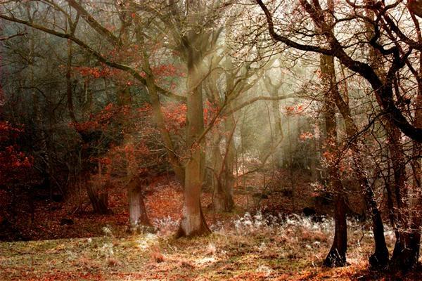 Enchanted Forest by tywanda46
