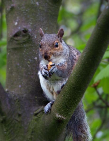 Squirrel Feeding by chensuriashi