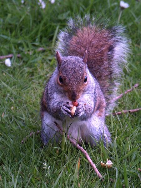 Squirrel Close Up by chensuriashi