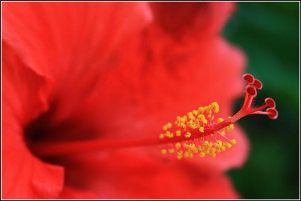 Flower by Eightball