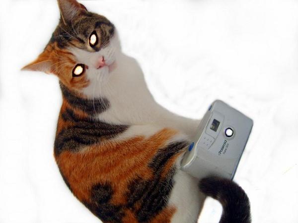 Kitty\'s A Bit Vain! by Panicat_thedisco