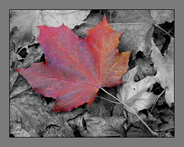 leaves by dwarf