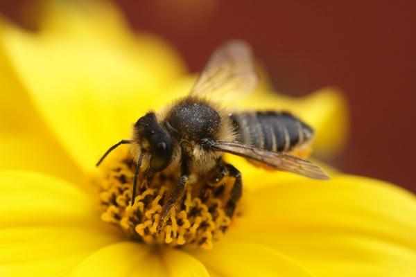 Pollen Addict by PostmanPat