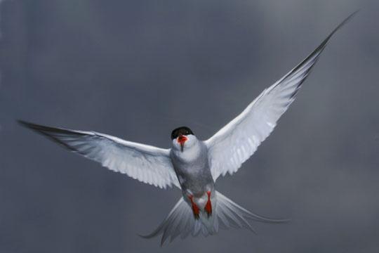 dive bombing by chris-plumb