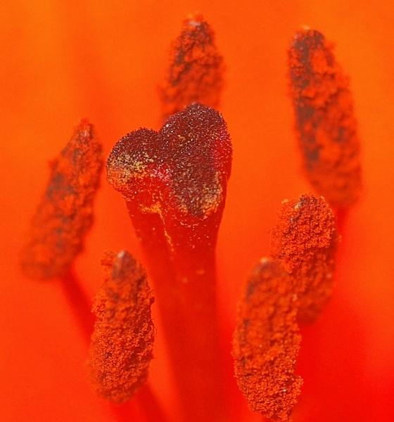 lilly nectar by XXXKEITHXXX