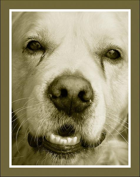 Dog by MNPHOTO
