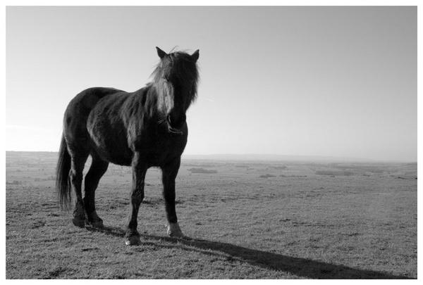Horse by danburt