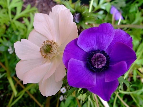 flowers by sandy22